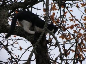 Omenapuussa